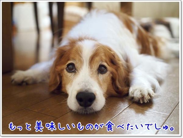 d0013149_00361058.jpg