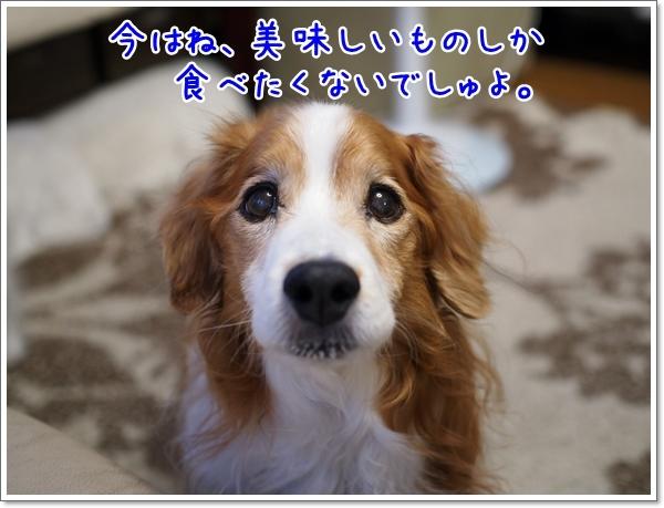 d0013149_23433667.jpg