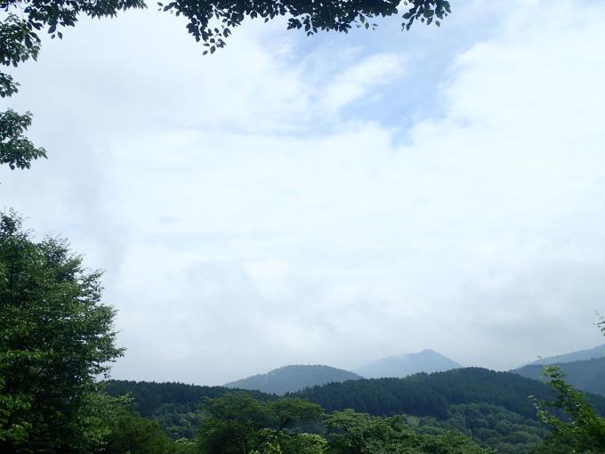 埼玉北部               メスアカミドリシジミ他2017/07/03③_d0251807_07343337.jpg