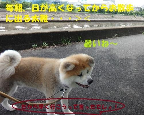 f0121712_15374919.jpg