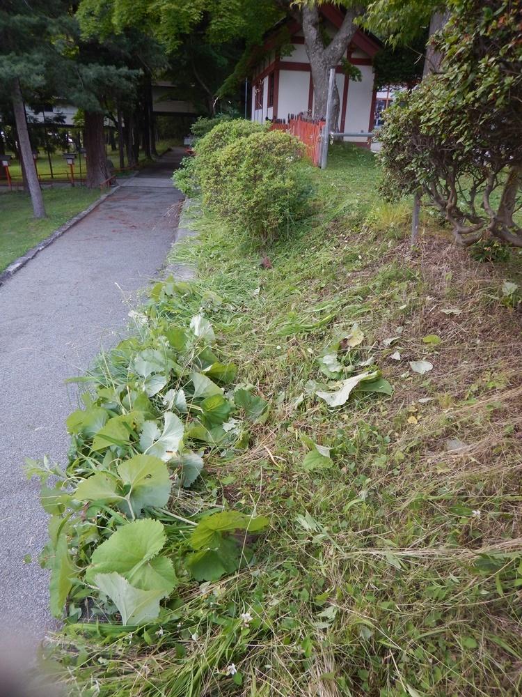 草刈り作業_c0111229_19350162.jpg