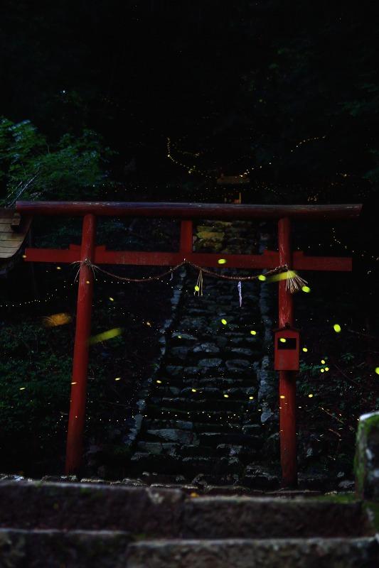 姫の舞い_a0294534_22152737.jpg