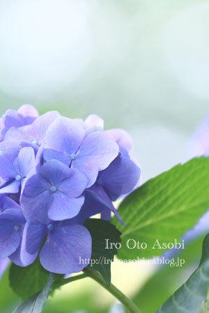 夏の空_d0300034_18203908.jpg