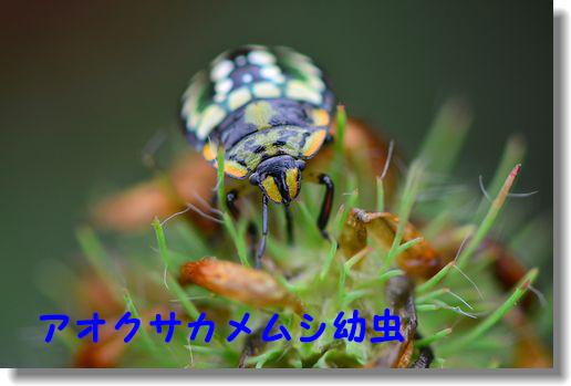 d0089358_23252994.jpg