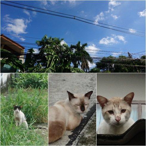 タイ料理修行~近所のこぎたない猫たち~_f0204175_20473950.jpg
