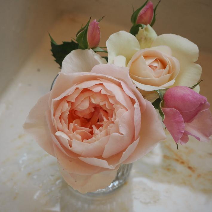 バラの切り花_a0292194_2210377.jpg