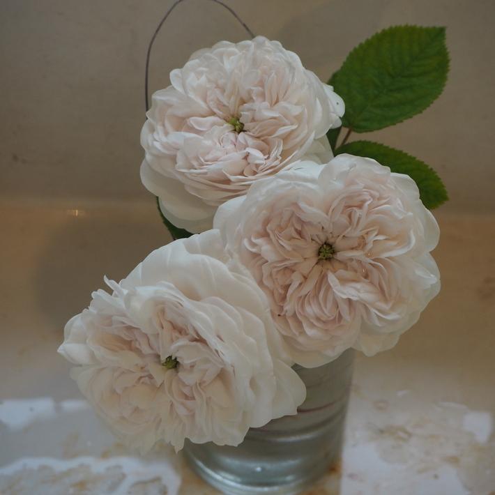 バラの切り花_a0292194_22152411.jpg