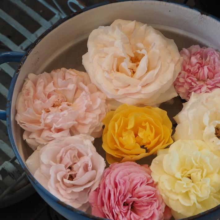 バラの切り花_a0292194_22222375.jpg