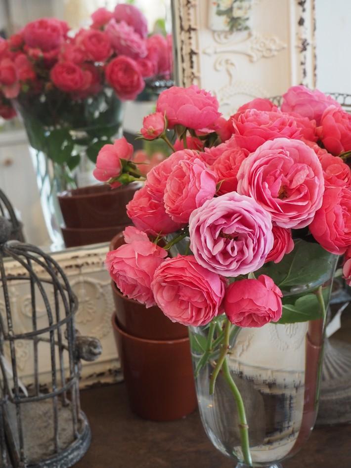 バラの切り花_a0292194_2244334.jpg