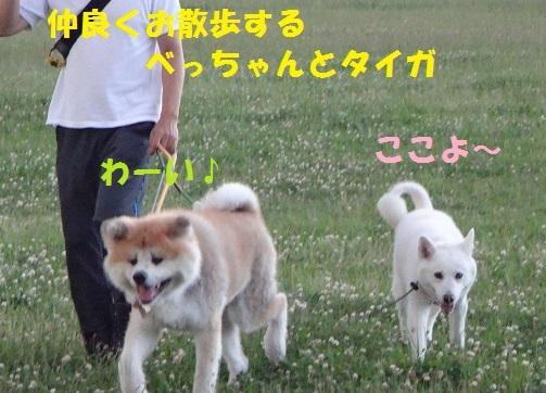 f0121712_22141052.jpg