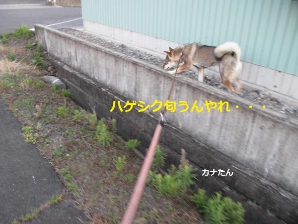 f0143123_10115857.jpg