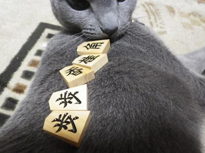 猫の背中に置いてみた_c0159826_7212881.jpg