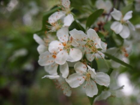 咲き始めました。_f0219043_06550797.jpg