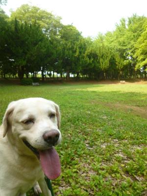 33℃ 週末の公園_a0165160_22033532.jpg