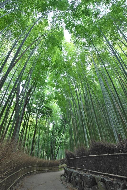 竹林の小径 2_f0018464_7151381.jpg
