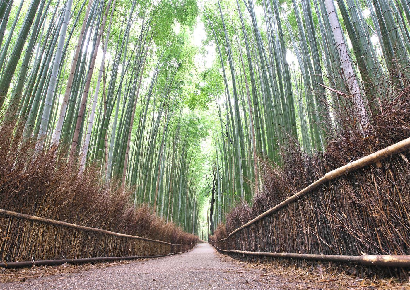 竹林の小径 2_f0018464_7161378.jpg