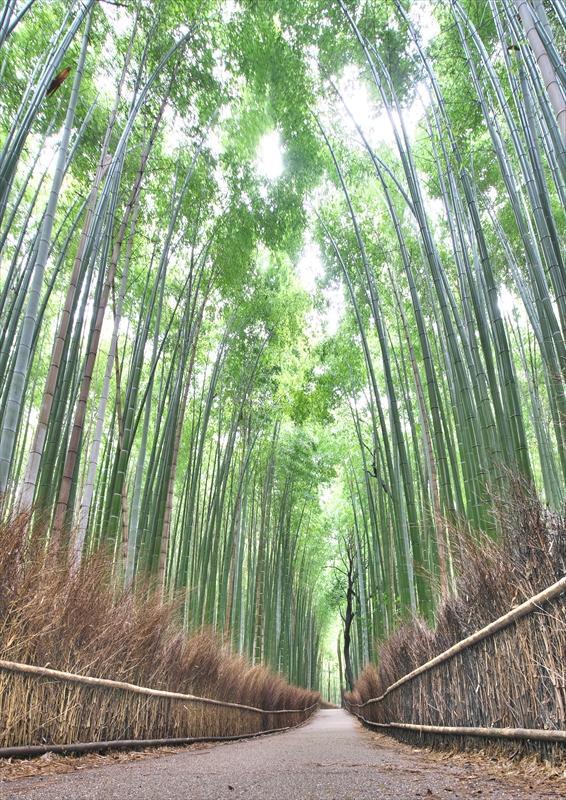 竹林の小径 2_f0018464_716197.jpg