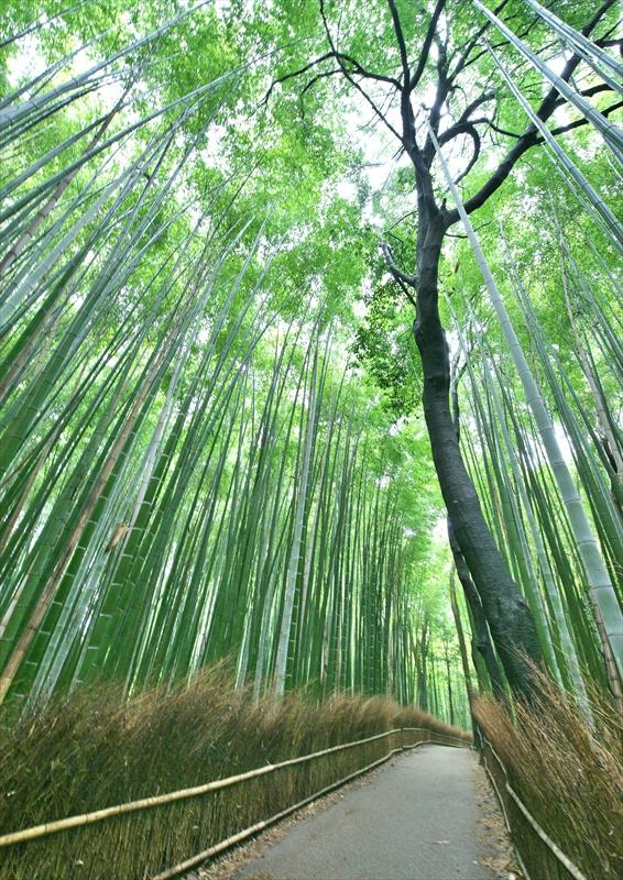 竹林の小径 2_f0018464_7162612.jpg