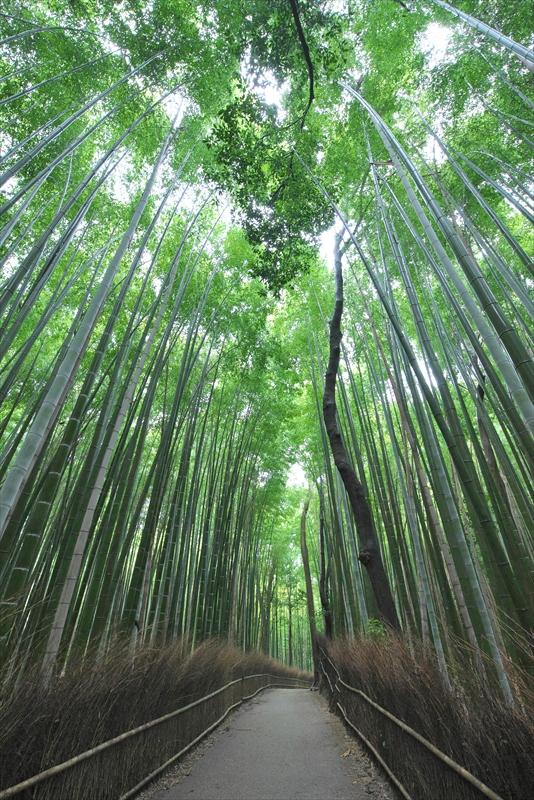 竹林の小径 2_f0018464_716773.jpg
