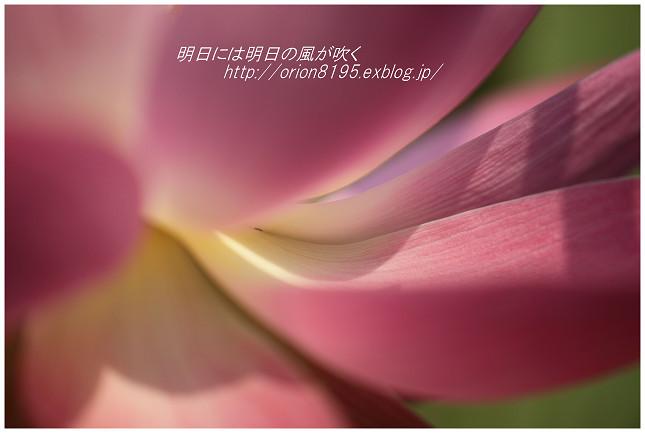 f0361079_20431848.jpg