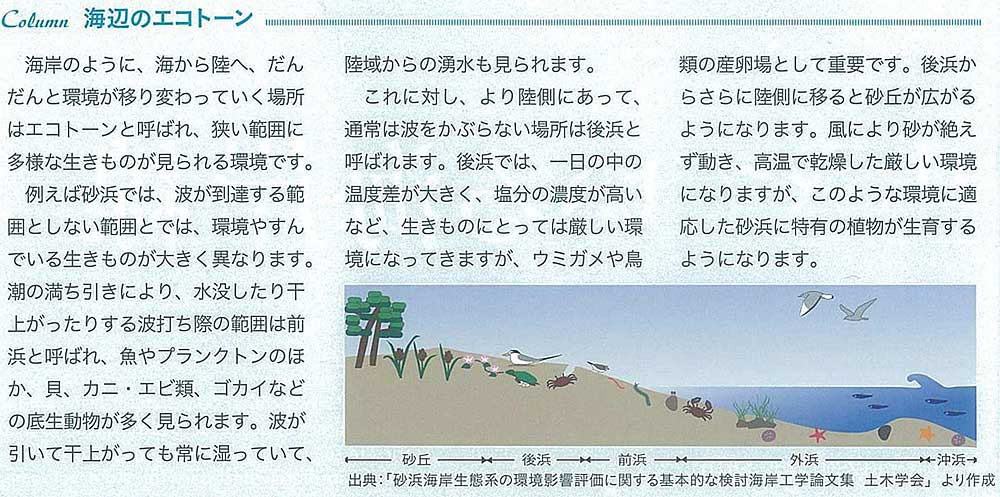 エコトーン(ecotone)のつくる風景_e0066586_9303548.jpg