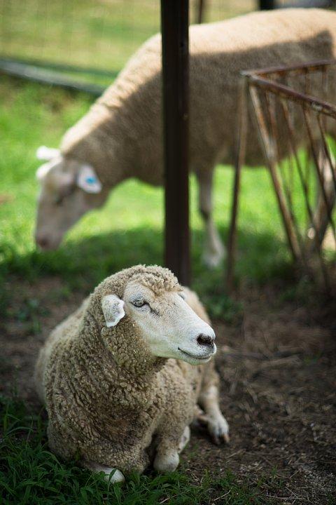 観光牧場の家畜たち_d0353489_11465470.jpg