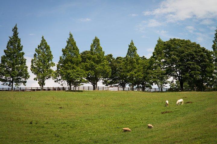 観光牧場の家畜たち_d0353489_114668.jpg