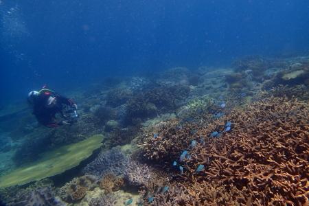 17.7.9 サンゴに元気もらって!_b0100730_21035645.jpg