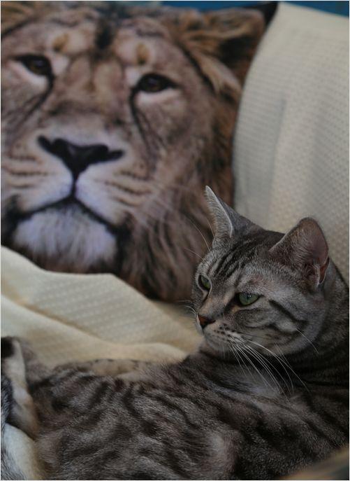 Cats (=^・^=)_a0256349_9544358.jpg