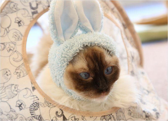 Cats (=^・^=)_a0256349_9545112.jpg