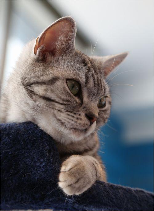 Cats (=^・^=)_a0256349_9545989.jpg
