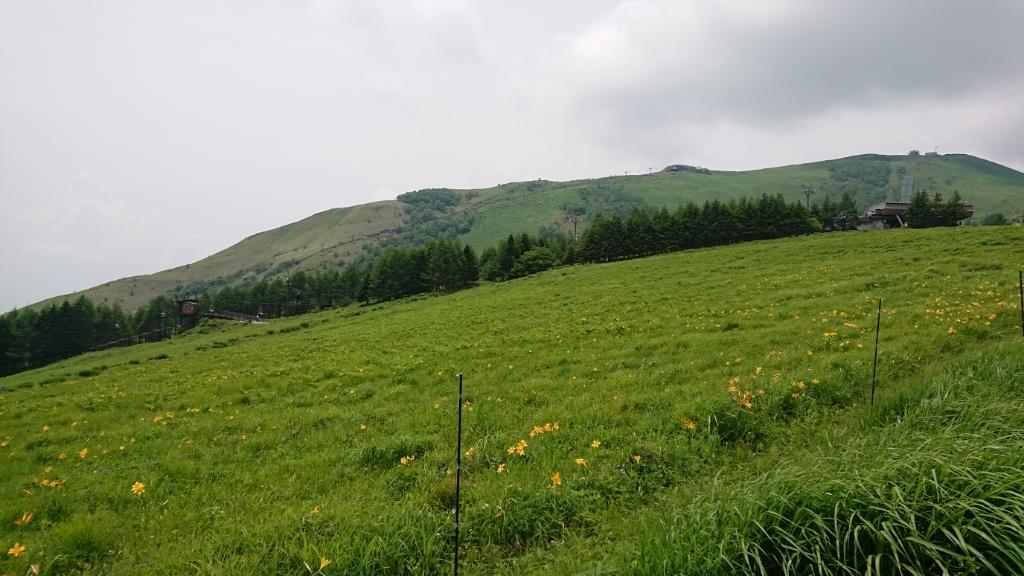 高原ハイキングとフィトセラピー。_e0254750_18401576.jpg