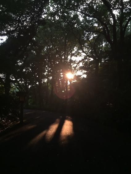 森の風、カラスの道_c0113755_01153469.jpg