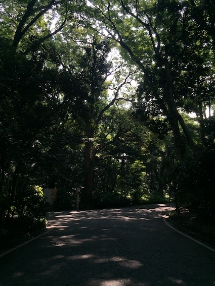 森の風、カラスの道_c0113755_01153768.jpg