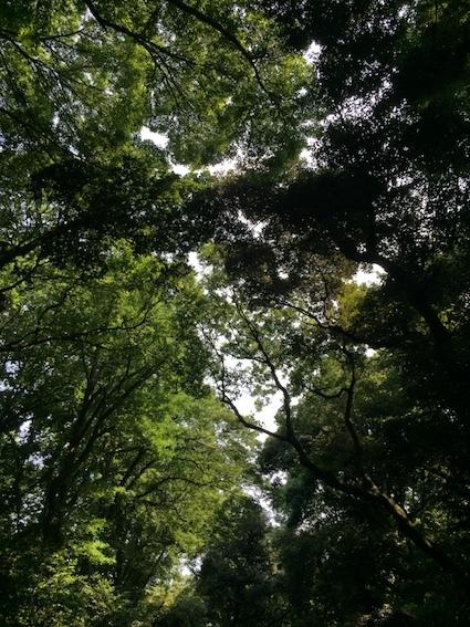 森の風、カラスの道_c0113755_01153985.jpg