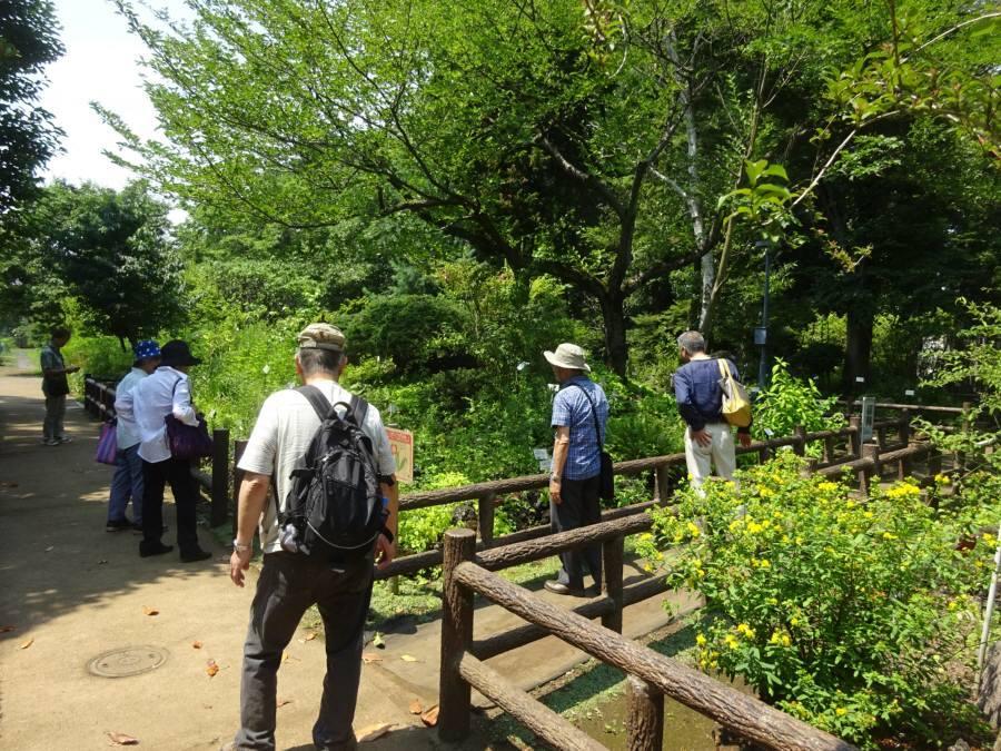 薬用植物園で野鳥と緑の会総会_f0059673_22430850.jpg