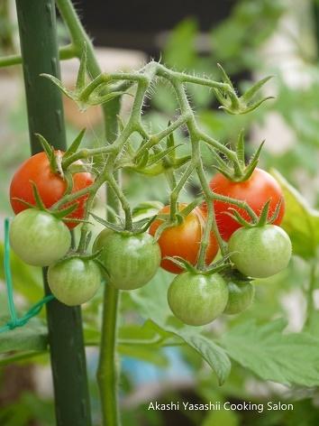 プチトマトとイタリアンパセリ_f0361692_13543093.jpg