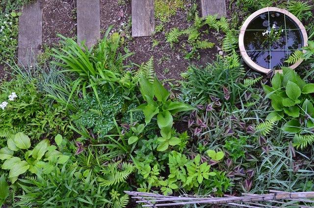2ヵ月前の振り返り、5月1日の庭。_c0124100_17231519.jpg