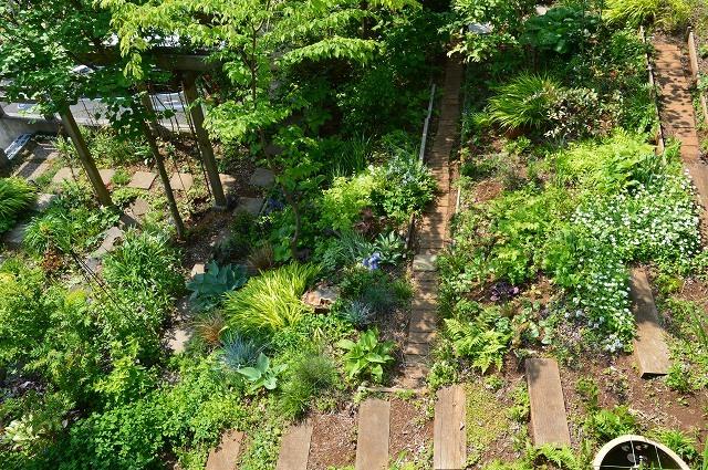 2ヵ月前の振り返り、5月1日の庭。_c0124100_17231875.jpg
