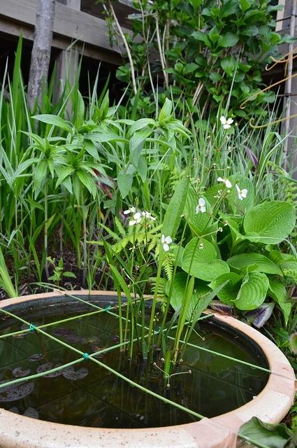 2ヵ月前の振り返り、5月1日の庭。_c0124100_17232800.jpg