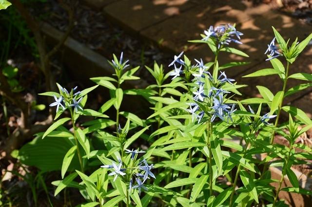 2ヵ月前の振り返り、5月1日の庭。_c0124100_17233293.jpg