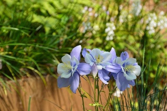 2ヵ月前の振り返り、5月1日の庭。_c0124100_17233792.jpg