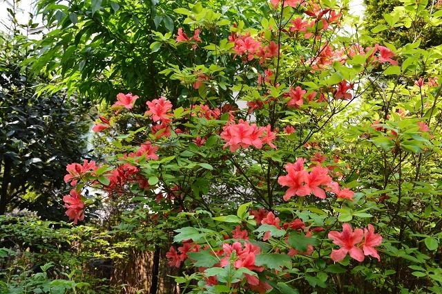 2ヵ月前の振り返り、5月1日の庭。_c0124100_17234055.jpg