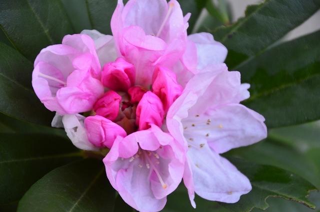 2ヵ月前の振り返り、5月1日の庭。_c0124100_17240437.jpg