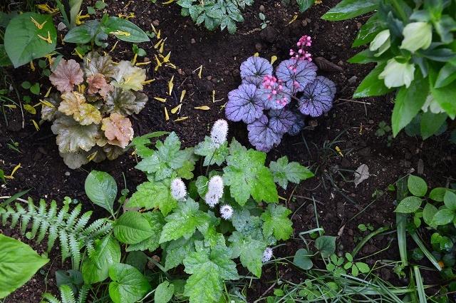 2ヵ月前の振り返り、5月1日の庭。_c0124100_17241349.jpg