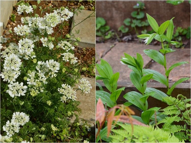 2ヵ月前の振り返り、5月1日の庭。_c0124100_17241616.jpg