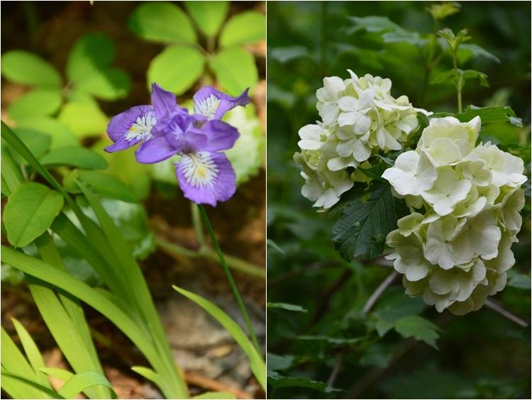 2ヵ月前の振り返り、5月1日の庭。_c0124100_17241949.jpg