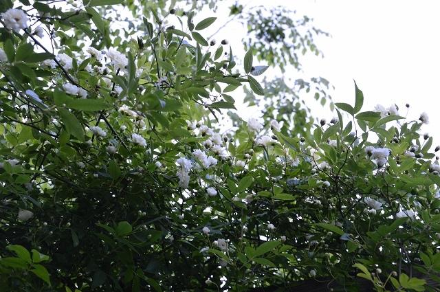 2ヵ月前の振り返り、5月1日の庭。_c0124100_17242150.jpg