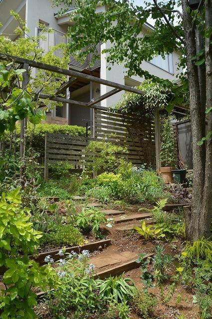 5月4日・11日の庭。_c0124100_18124041.jpg