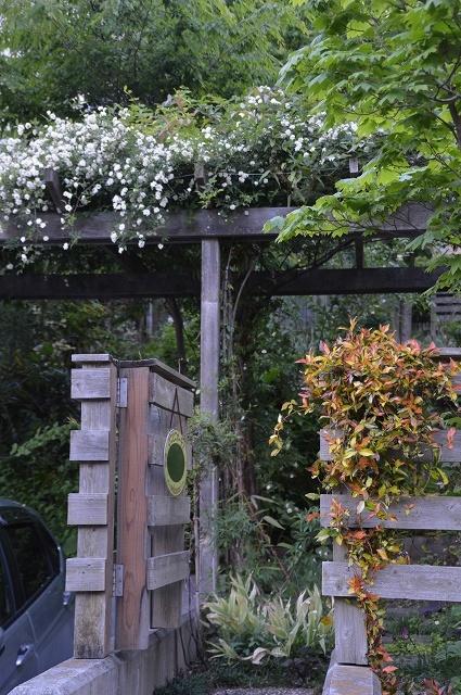 5月4日・11日の庭。_c0124100_18131299.jpg